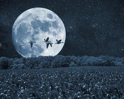 night-2634930__340