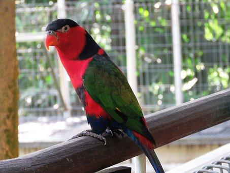 parrot-2459232__340 (1)