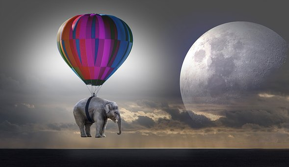 elephant-2611677__340