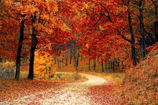 fall-1072821__340 (1)