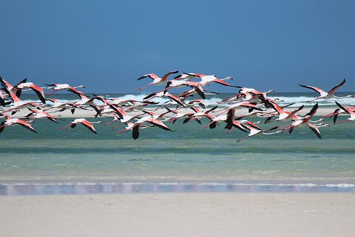 flamingo-1899458__340 (1)