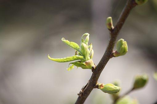 spring-2151849__340 (1)