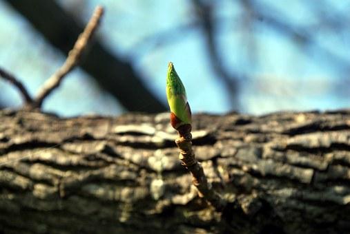 twig-18078__340