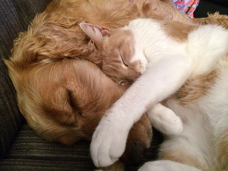 cat-and-dog-775116__340
