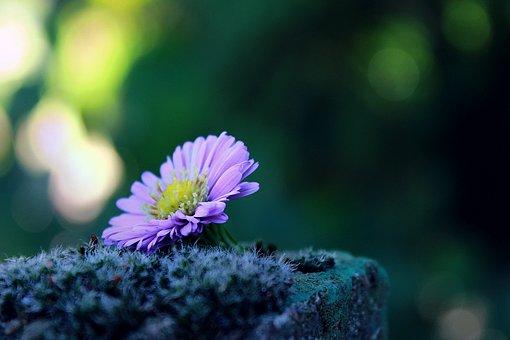 flower-1739892__340