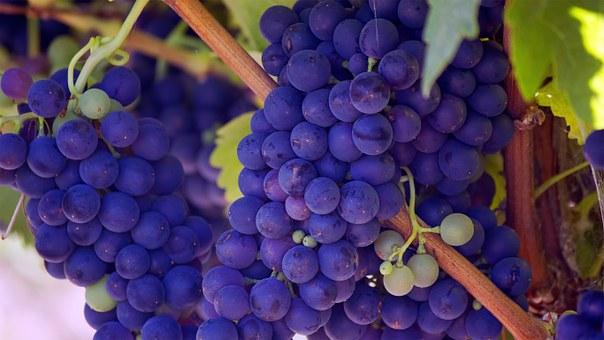grapes-690977__340