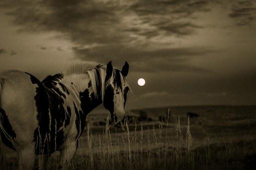horse-1090674__340