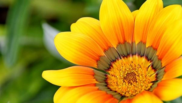 yellow-715540__340 (1)