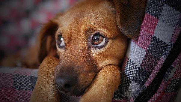 dog-3071334__340 (1)