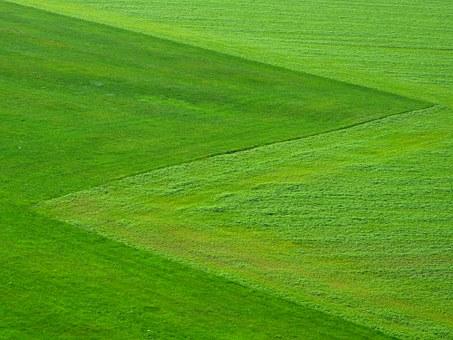 meadow-196567__340 (1)