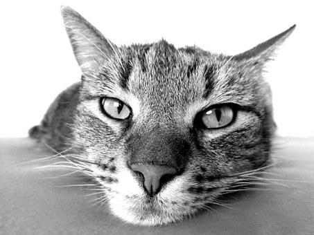 cat-98359__340 (1)