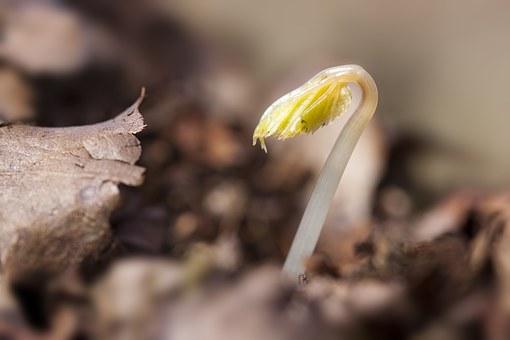 seedling-1284663__340