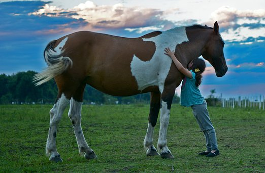 horse-2536537__340