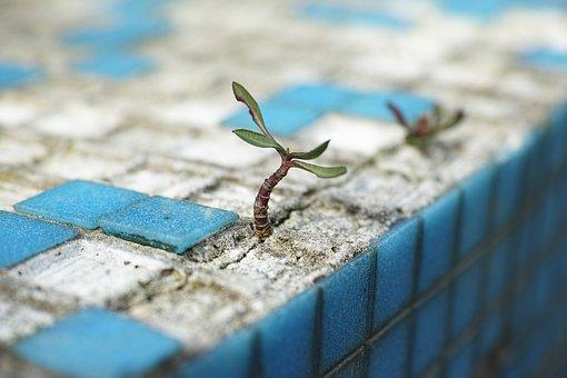 plant-2318936__340