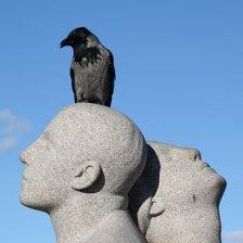 bird-1728083__340