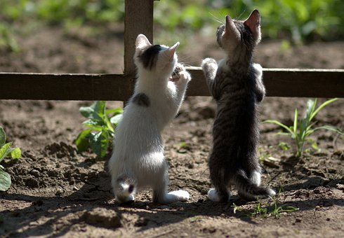 cats-4321163__340