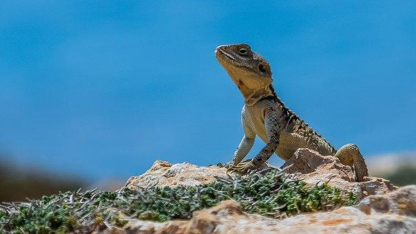 reptile-3331556__340.jpg