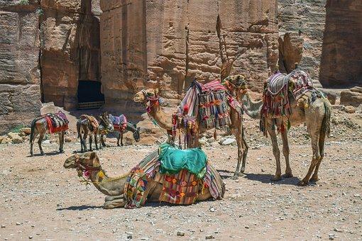 camels-4358579__340
