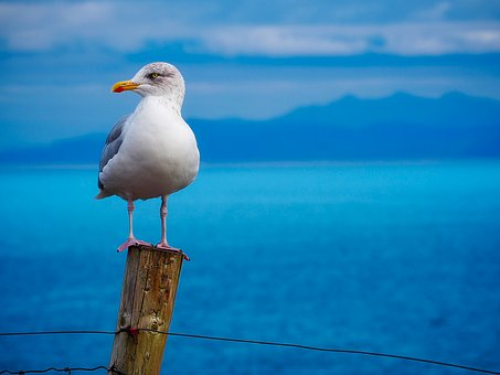 seagull-1900657__340